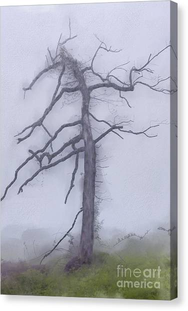 Groundhogs Canvas Print - Old Tree In Fog In The Blue Ridge Ap by Dan Carmichael