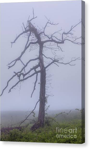 Groundhogs Canvas Print - Old Tree In Fog In The Blue Ridge by Dan Carmichael