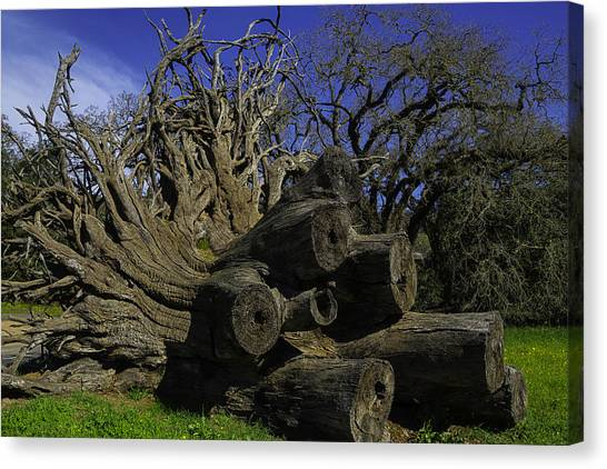 Fallen Tree Canvas Print - Old Tree Roots by Garry Gay