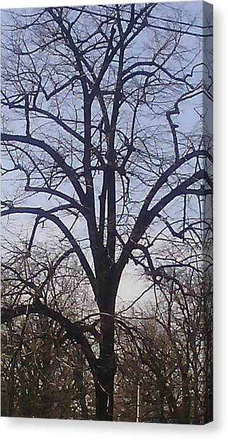 Shapes Canvas Print - Old Tree With A Lot Of Brunches by Anamarija Marinovic