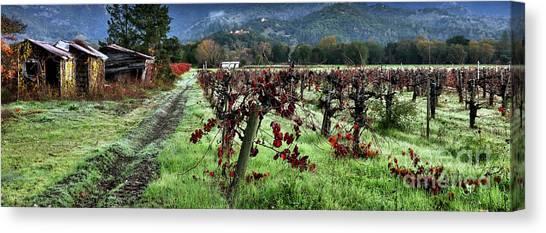 Sonoma Valley Canvas Print - Old Vineyard Barns by Jon Neidert