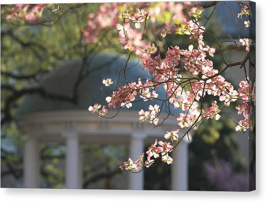 University Of North Carolina Chapel Hill Canvas Print - Old Well And Pink Dogwoods by Matt Plyler