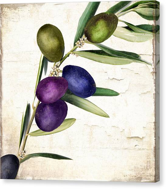 Olive Oil Canvas Print - Olive Branch II by Mindy Sommers