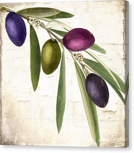 Olive Oil Canvas Print - Olive Branch by Mindy Sommers