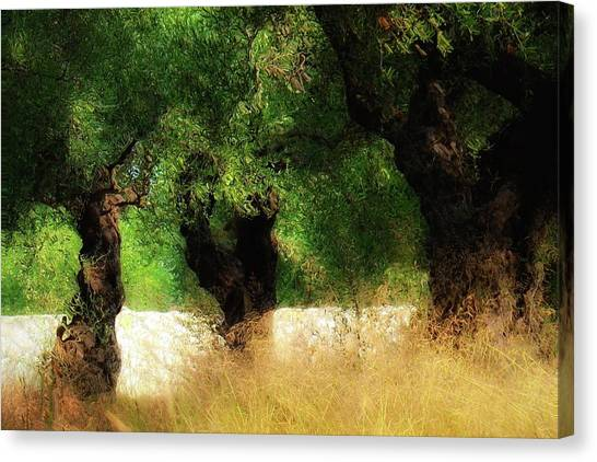 Olive Forest Canvas Print by Svetlana Peric