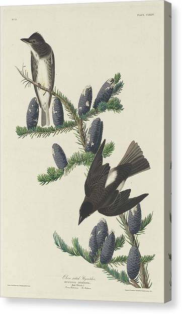 Flycatchers Canvas Print - Olive-sided Flycatcher by Dreyer Wildlife Print Collections