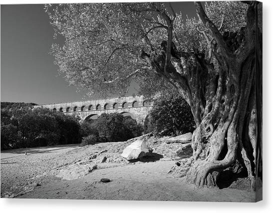 Olive Tree And Pont Du Gard, France Canvas Print