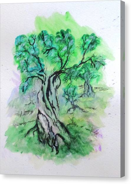 Olive Tree Grove Canvas Print