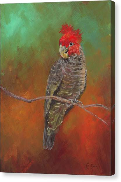 Cockatoos Canvas Print - Ollie by Kirsty Rebecca