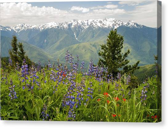Olympic Peninsula Canvas Print - Olympic Mountain Wildflowers by Brian Harig