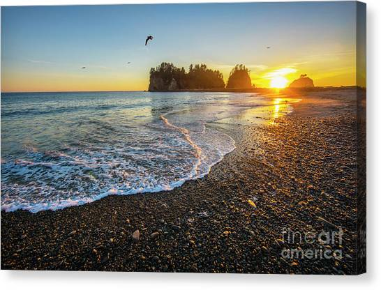 Olympic Peninsula Sunset Canvas Print