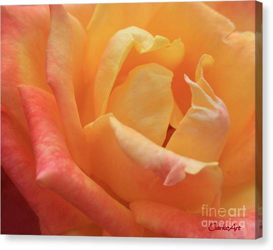 Ombre Rose Canvas Print