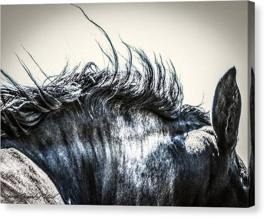 #1240 - Mortana Morgan Mare Canvas Print