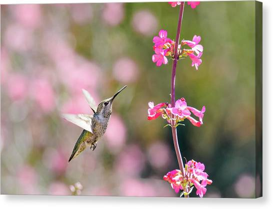 On Approach Canvas Print by Emily Bristor