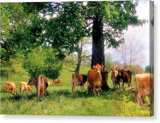On Emerald Pastures Canvas Print by Jan Amiss Photography