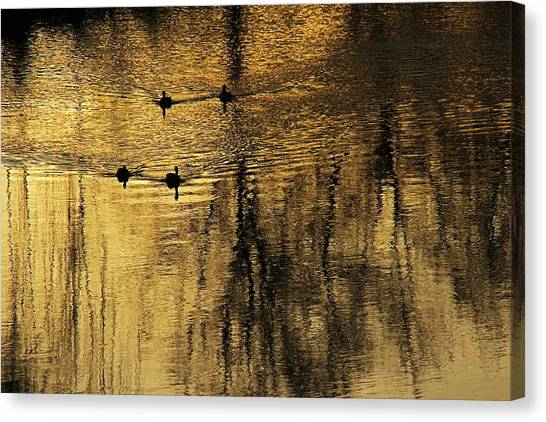 Pacific Division Canvas Print - On Golden Pond 4189 by Donald Sewell