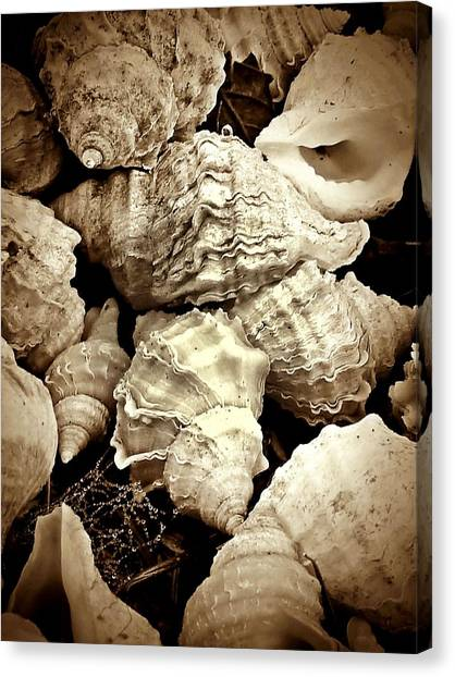 On The Beach - Shells In Sepia Canvas Print