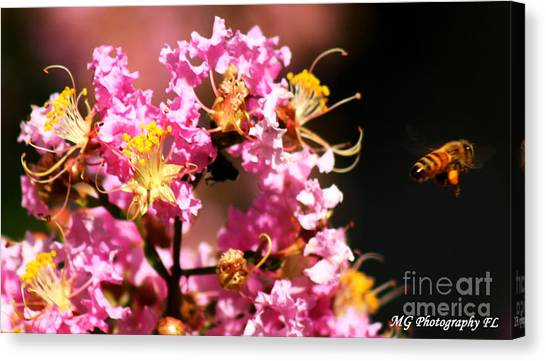 On The Buzz Canvas Print