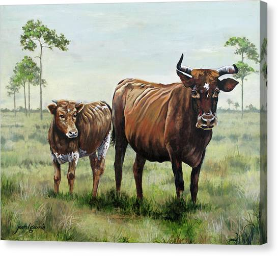 On The Florida Prairie Cracker Cattle Canvas Print