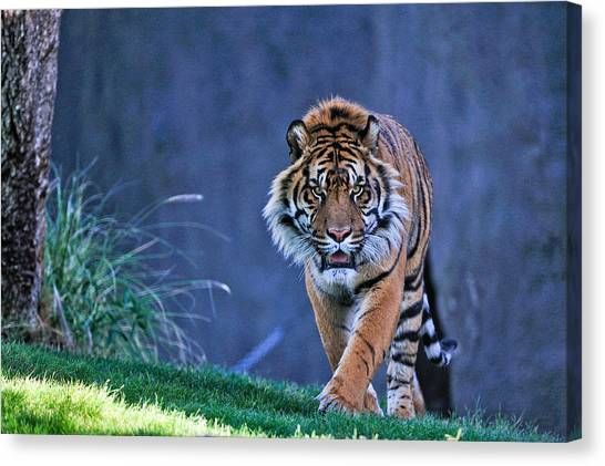 On The Hunt Canvas Print by Tom Dowd