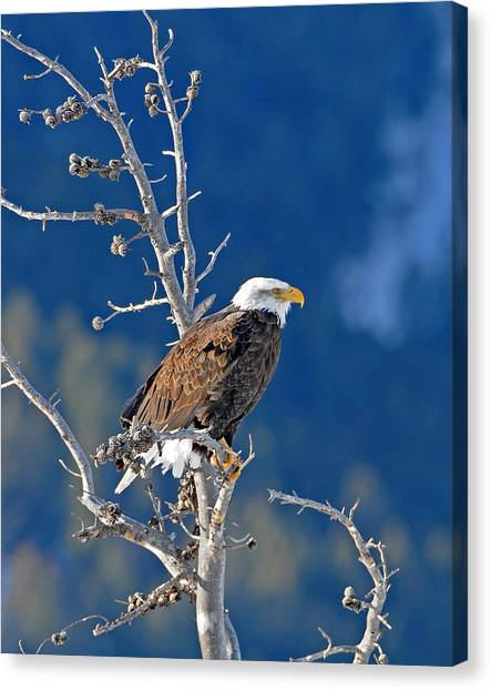 On The Lookout Canvas Print