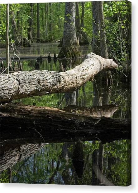 On The Swamp Canvas Print by Alan Raasch