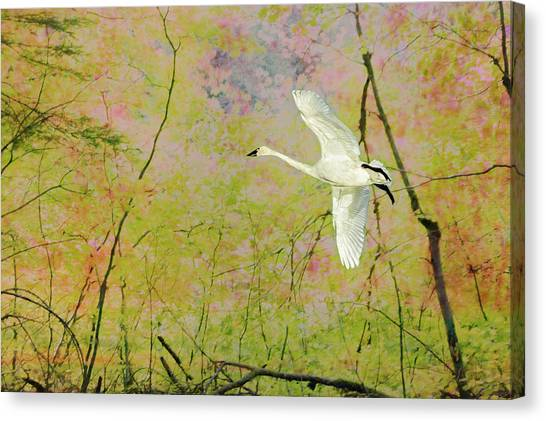 Canvas Print featuring the photograph On The Wing by Belinda Greb