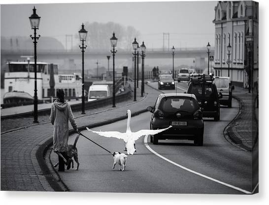 Swan Canvas Print - On The Wrong Side Of The Road by Gerard Jonkman