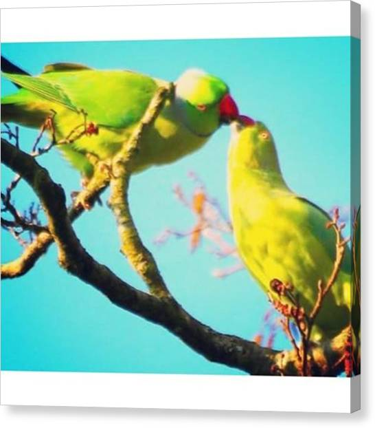 Parakeets Canvas Print - On Top Of A Tree, Parakeets In by Elizabeth Whycer