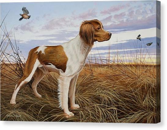 On Watch - Brittany Spaniel Canvas Print