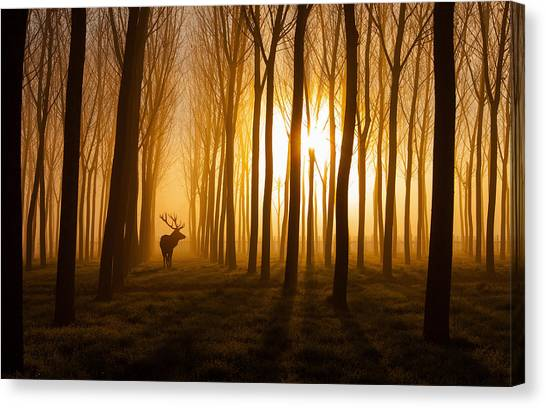 Fog Mist Canvas Print - Once Upon A Time by Nafets Norim