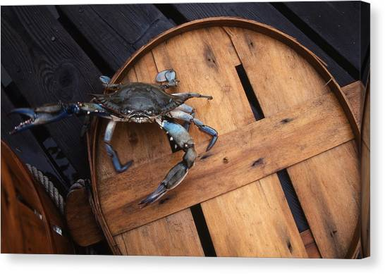 Crabbing Canvas Print - One Angry Crab by Skip Willits