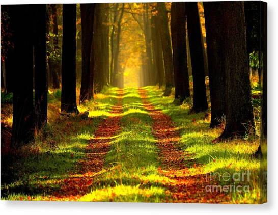 Forest Paths Canvas Print - One Autumn Day by Thomas Jones