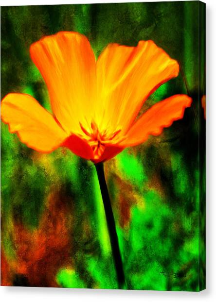 One California Poppy Canvas Print