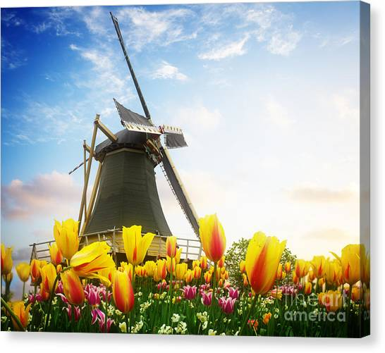 One Dutch Windmill Over  Tulips Canvas Print