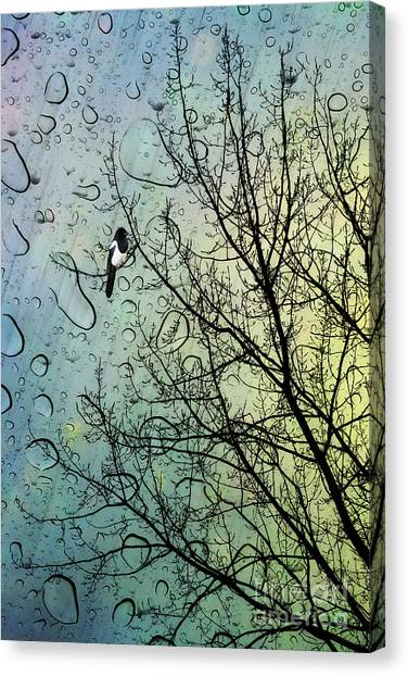Magpies Canvas Print - One For Sorrow by John Edwards