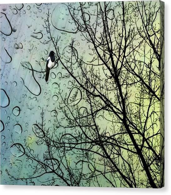 Canvas Print - One For Sorrow #nurseryrhyme by John Edwards