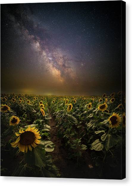 Canvas Print featuring the photograph One In A Million  by Aaron J Groen