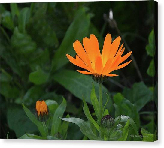 One In Bloom Canvas Print