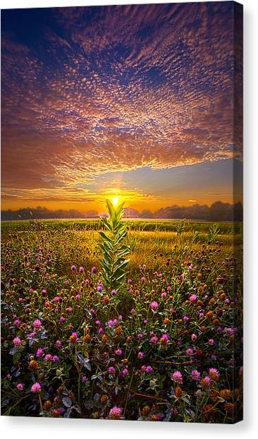Clover Canvas Print - One Last Kiss by Phil Koch