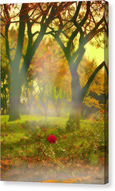 One Last One Canvas Print