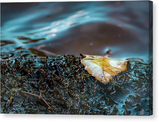 One Leaf Canvas Print