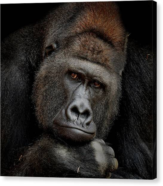 Primates Canvas Print - One Moment In Contact by Antje Wenner