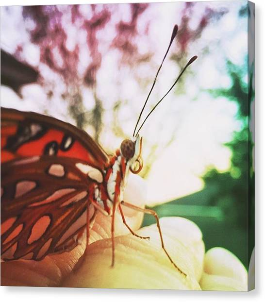 Insects Canvas Print - One More😄#butterfly by Joan McCool