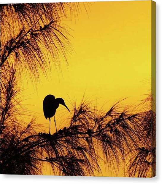 Birds Canvas Print - One Of A Series Taken At Mahoe Bay by John Edwards