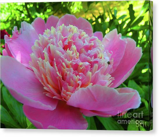 One Of The Peony Sisters Of Nebraska City  Canvas Print by Christine Belt