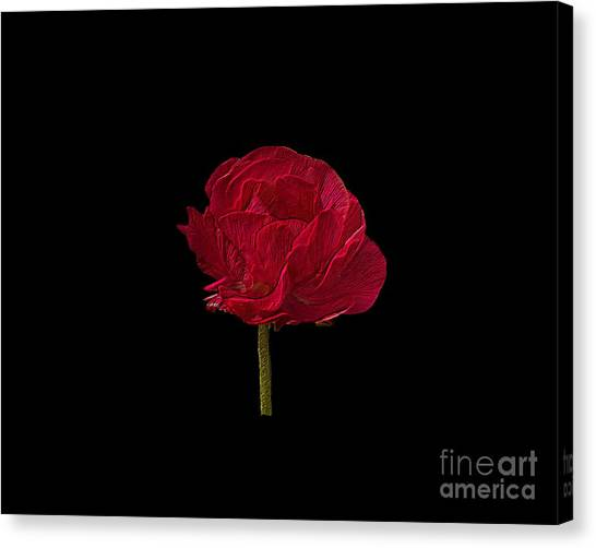 One Red Flower Tee Shirt Canvas Print
