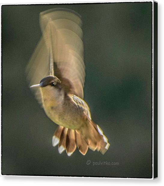 One_wing Canvas Print