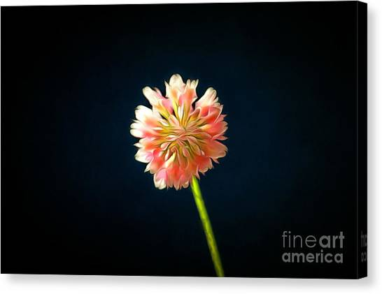 Clover Canvas Print - Only The Lonely by Krissy Katsimbras