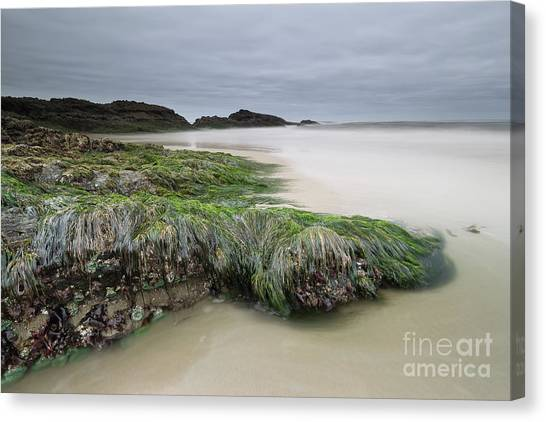 Seagrass Canvas Print - Only When It's Super Low Tide by Masako Metz